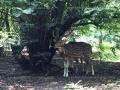 Deer park, Ballavpur forest