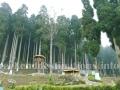 Lamahatta park near Darjeeling