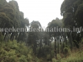 Pine forests aroun Lepcha Jagat