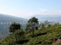 Rangbull tea garden