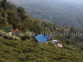 Resort Rongbull within tea garden