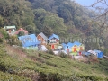 Resort Rongbull within tea garden