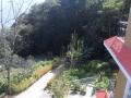 Forest around Solofok Hotel