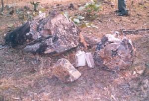 Fossils in Mandro, Sahibganj