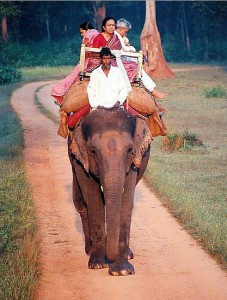 Elephant ride at Betla