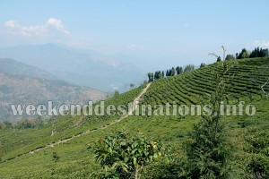 Tea Estates at Takdah