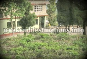 Tea Gardens around Kurbia Homestay
