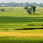 Singee Village, Bardhaman