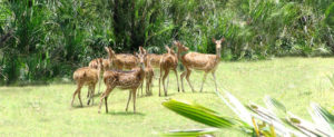 Wild animals at Bhitarkanika